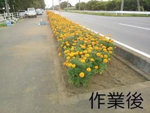 かすみがうら市フラワーロード除草作業03