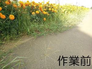 かすみがうら市フラワーロード除草作業01